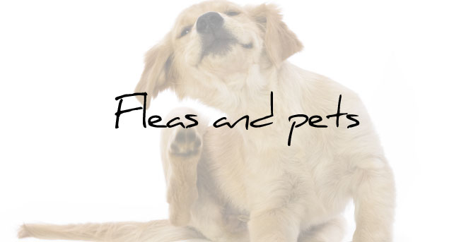 Fleas and Pets
