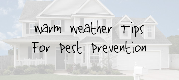 Warm Weather Tips for Pest Prevention